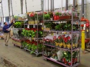 Bell Nursery Plants Check