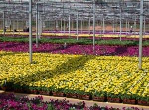 floriculture3