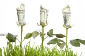 moneyflowers