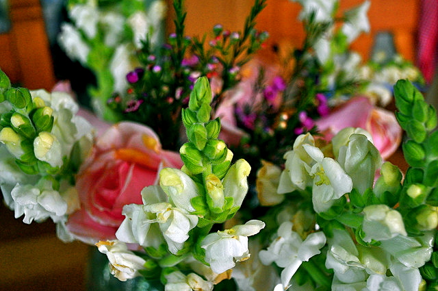 New AFE Research Report: Enhancing the Quality of Fresh Cut Flowers