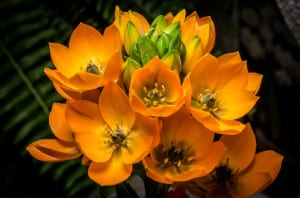 orangestockflowers