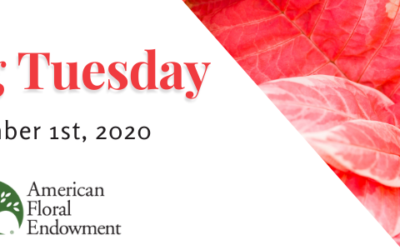 AFE's Giving Tuesday 2020