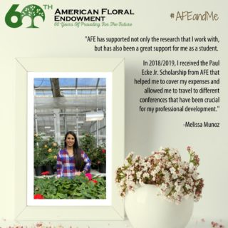 "Melissa Munoz of @ClemsonUniversity says, ""AFE has impacted my professional development and life in different ways, all of them really gratifying. I started my masters degree at Clemson University in August 2016 with a research project funded by AFE. Thanks to that project I have gained experience in floriculture, met a lot of wonderful people, interacted directly with cut flower growers, and I like it so much that now I'm doing my Ph.D. with another project funded by AFE!"" Thanks Melissa! Share your experience here: https://buff.ly/33AEidt or tag us on social media.⠀ #AFEandMe #60thAnniversary #Giveback #FloralIndustry #Research #Internships #Scholarships"